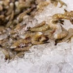 Biloxi Freezing Shrimp